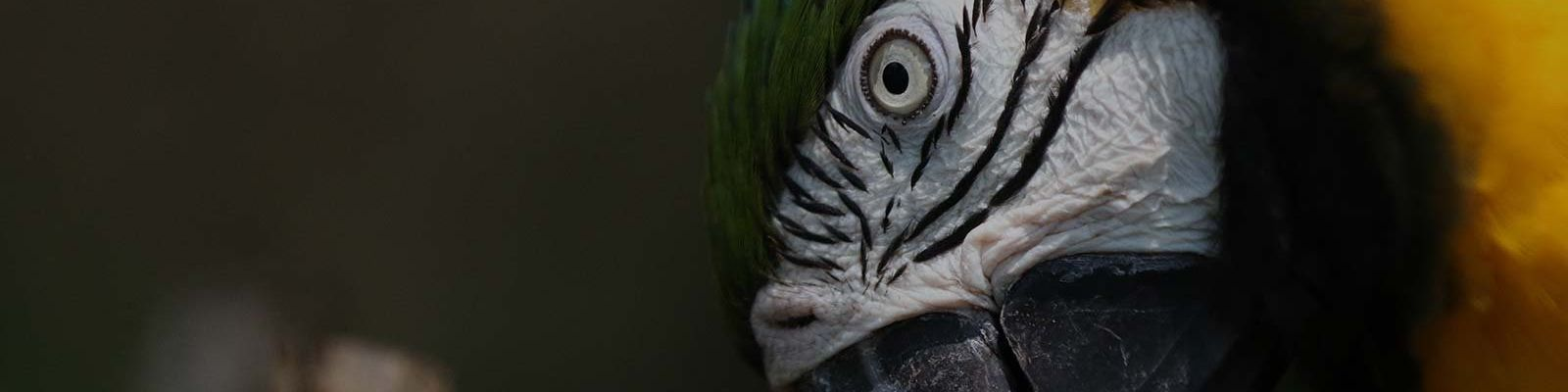 Zoom lens parrot Close Up
